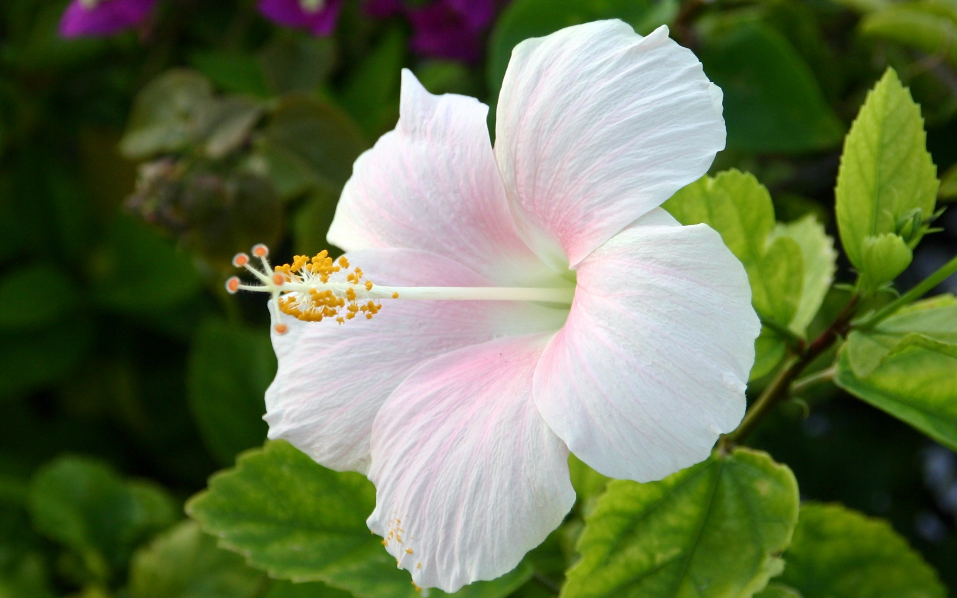 different-types-of-flowers-and-its-name