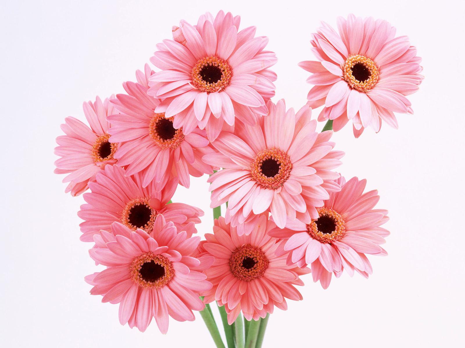 flowers-wallpapers-hd-desktop-beautiful-back-grounds