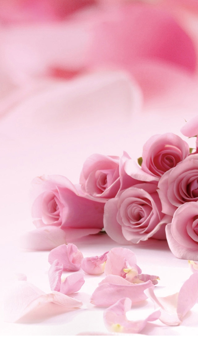 Pink-Roses-Valentines-Day-iPhone-5-Wallpaper