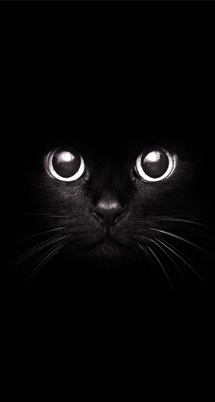 Black Cat Staring Eyes
