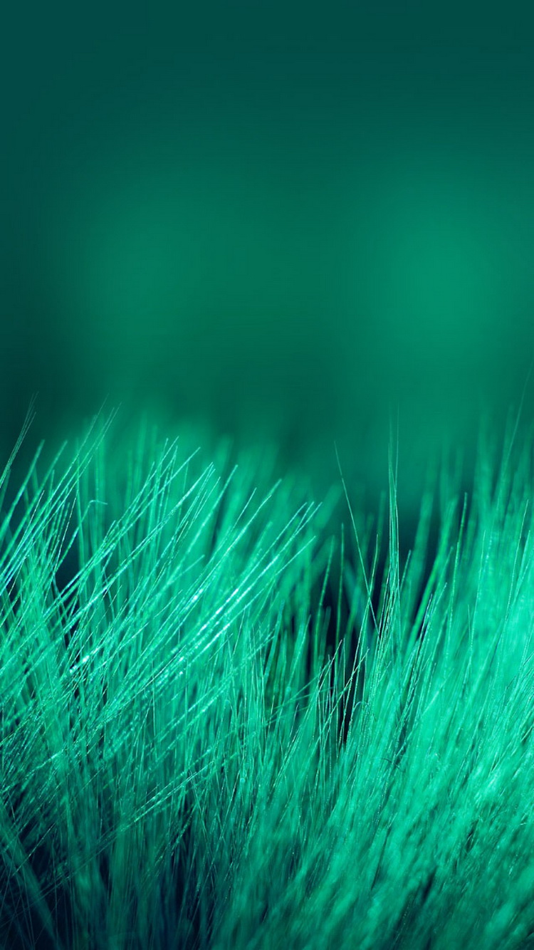 Green Grass Threads Depth Of Field iPhone 6 Wallpaper