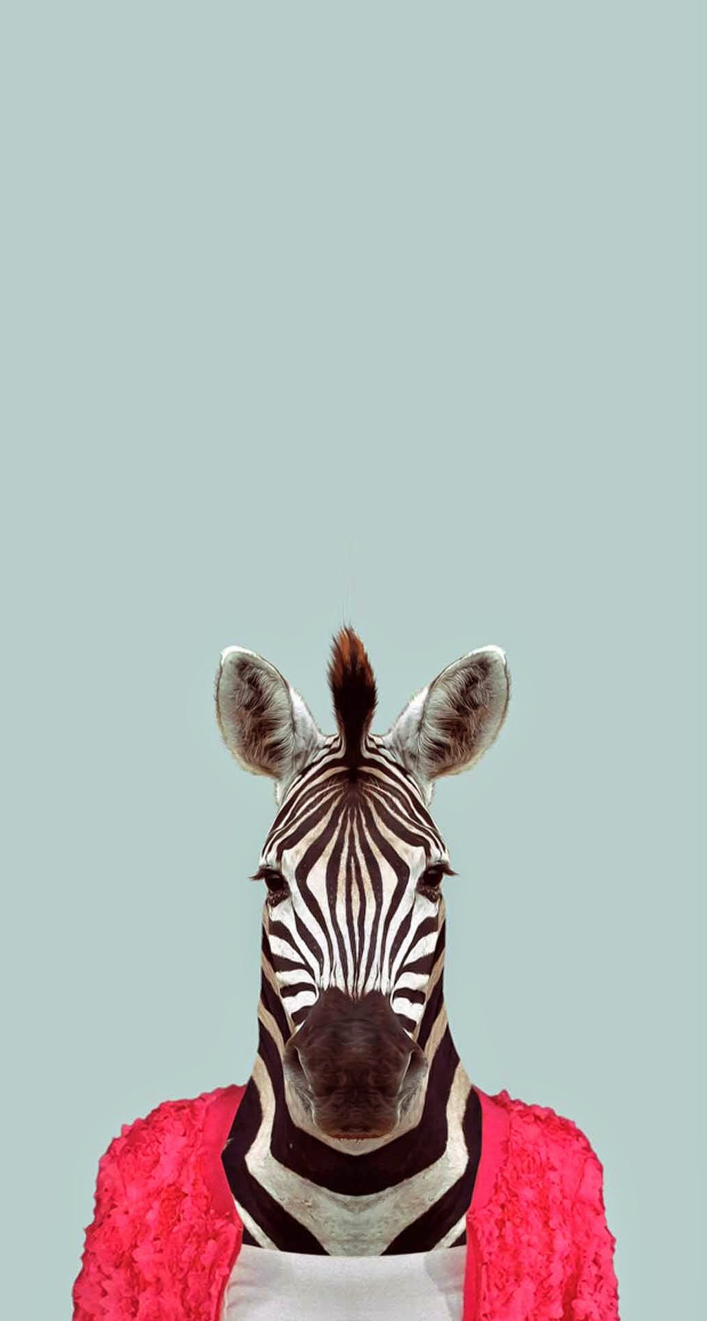 Zebra Funny Animal Portrait iPhone 6 Plus HD Wallpaper