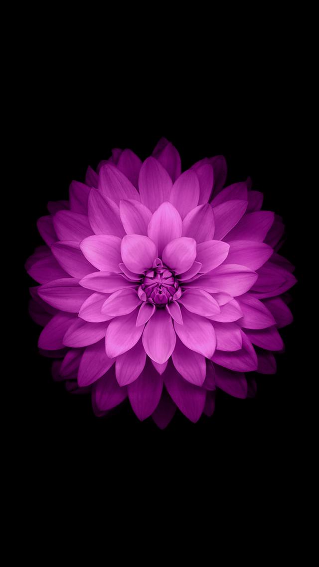 iOS 8 Purple Flower Dark Background iPhone 5 Wallpaper